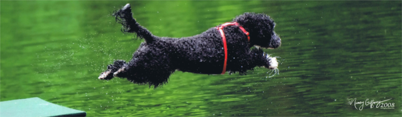 11a4cef45b7 Welcome to WHOOSH Portuguese Water Dogs!