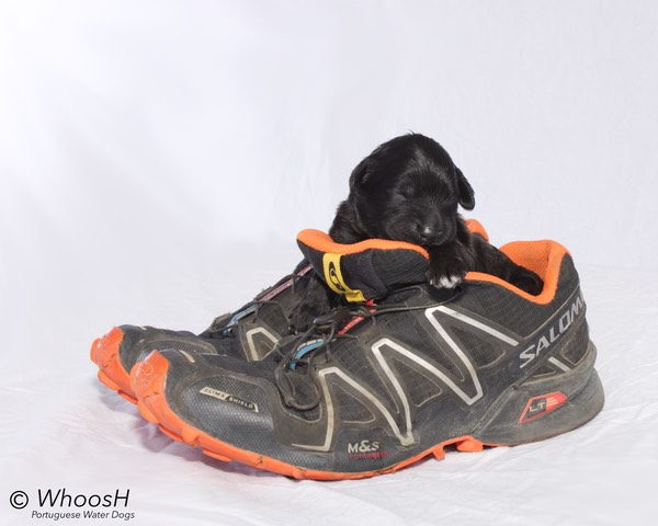 Orange - 1 Week - Agility Shoe